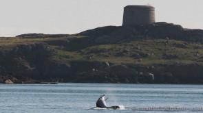 dolphins-april201210
