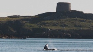 dolphins-april201210