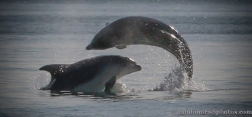 dolphins-april201211