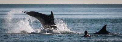 dolphins-april201213