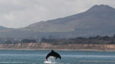 dolphins-april20123