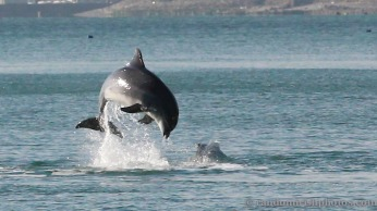dolphins-april20124