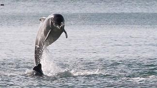 dolphins-april20125