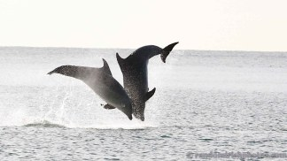 dolphins-april20126