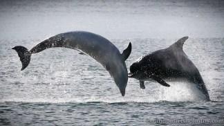 dolphins-april20127