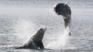 dolphins-april20128
