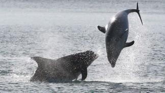 dolphins-april20129