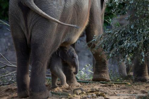 02-02-02-elephant2-1