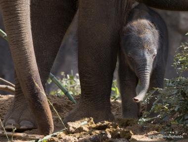 05-07-08-elephant8-1