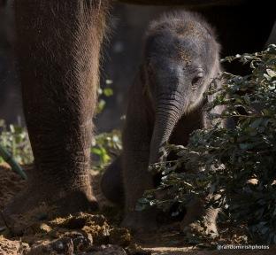 06-08-09-elephant9-1