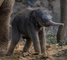 14-19-20-elephant20-1