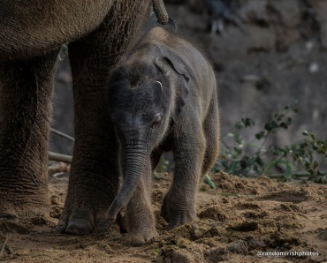 15-21-22-elephant23-1