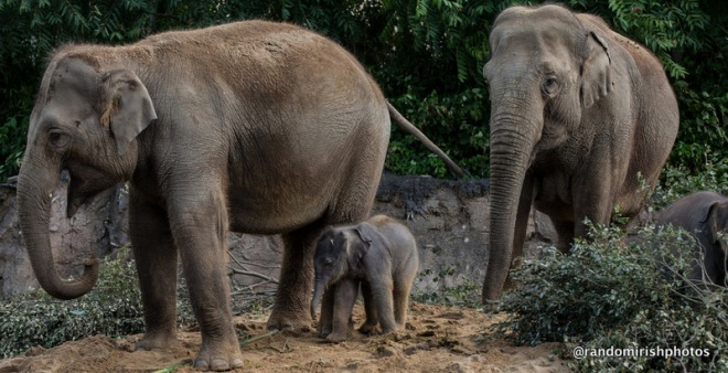 16-22-23-elephant24-1