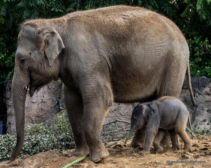 17-23-24-elephant25-1
