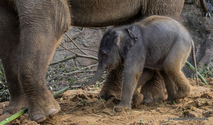 18-24-25-elephant26-1