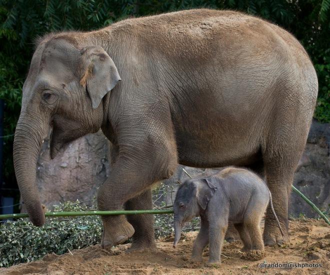19-26-27-elephant28-1