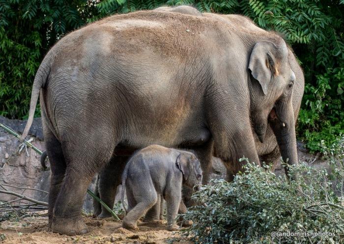 20-28-29-elephant30-1